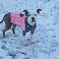 Adopt A Pet :: Reece - Monroe, NC