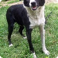 Adopt A Pet :: Neo - Pt. Richmond, CA