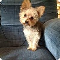 Adopt A Pet :: Kodi - Cleveland, OH