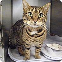 Adopt A Pet :: freya - El Cajon, CA