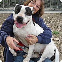 Adopt A Pet :: BeBe - Carpenteria, CA