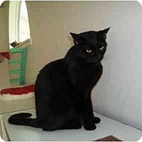 Adopt A Pet :: Dyson - Hamburg, NY