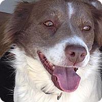 Adopt A Pet :: Cassidy - San Diego, CA