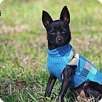 Adopt A Pet :: Peppy - Albany, NY