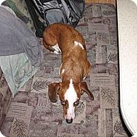 Adopt A Pet :: JAR JAR BINKS - Portland, OR