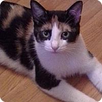 Adopt A Pet :: Myra - St. Louis, MO