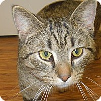 Adopt A Pet :: Harry - Medina, OH