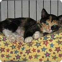 Adopt A Pet :: Lady - Wakinsville, GA
