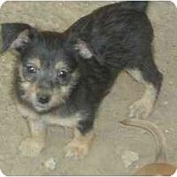 Adopt A Pet :: Sissy - Fowler, CA