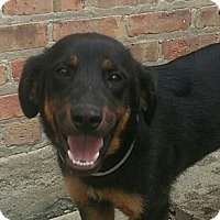 Adopt A Pet :: Jack*PENDING!* - Chicago, IL