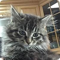 Adopt A Pet :: Issac - Raritan, NJ
