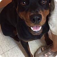 Adopt A Pet :: Luna - Irmo, SC