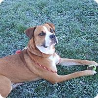 Adopt A Pet :: Zeus - Andrew, IA