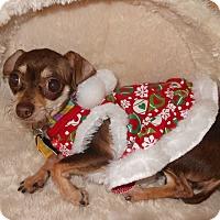 Adopt A Pet :: Penny - Shawnee Mission, KS