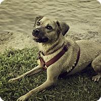 Adopt A Pet :: Courtesy Post: Penny - Nashville, TN