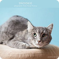 Adopt A Pet :: Snookie - Lombard, IL