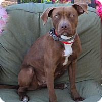 Adopt A Pet :: Jessie - Toluca Lake, CA