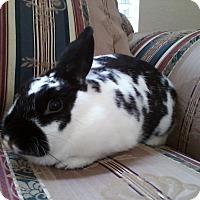 Adopt A Pet :: Toby - Watauga, TX