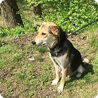 Adopt A Pet :: Haley - Charlestown, RI
