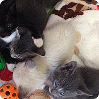 Adopt A Pet :: Sloan $125 - Seneca, SC