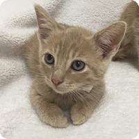 Adopt A Pet :: Obi Wan - Mission Viejo, CA