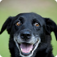 Adopt A Pet :: Leigha - Daleville, AL