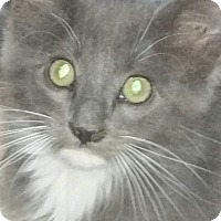 Adopt A Pet :: Curley - Grand Junction, CO