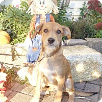 Adopt A Pet :: Tuscani - West Chicago, IL
