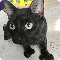 Adopt A Pet :: Merryweather - Hammond, LA