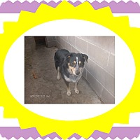 Adopt A Pet :: BUSTER - KELLYVILLE, OK