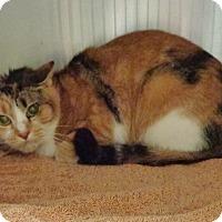 Adopt A Pet :: BETH adoptable 12/13 - Marietta, GA