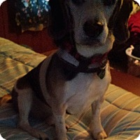 Adopt A Pet :: Charlie - Painesville, OH