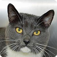 Adopt A Pet :: Captain - Englewood, FL