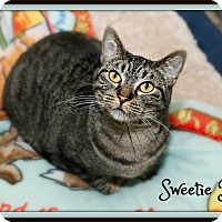 Adopt A Pet :: Sweetie Pie - Fallbrook, CA