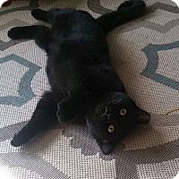 Adopt A Pet :: Arya - Covington, KY