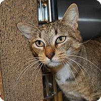 Adopt A Pet :: Blossom - Windsor, VA