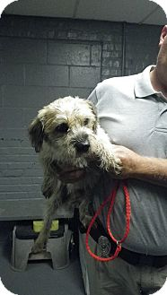 Terrier (Unknown Type, Small) Mix Dog for adoption in Fort Scott, Kansas - Howdy