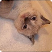 Adopt A Pet :: Pooh - Acme, PA