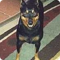 Adopt A Pet :: Milan - McDonough, GA