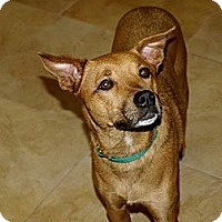 Adopt A Pet :: Lilly - Mission Viejo, CA