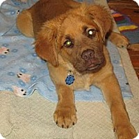 Adopt A Pet :: Tanner - PENDING, in Maine - kennebunkport, ME