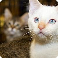 Adopt A Pet :: NoVorro - Irvine, CA