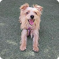 Adopt A Pet :: Paddington - Encinitas, CA