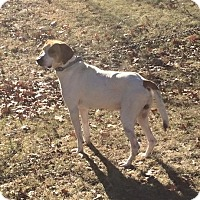 Adopt A Pet :: Jack - Prole, IA