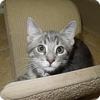 Adopt A Pet :: Candy - Medina, OH