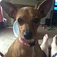 Chihuahua Mix Dog for adoption in Spring, Texas - ChiChi