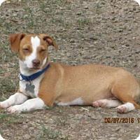 Adopt A Pet :: Freddie - Williston Park, NY