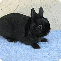 Adopt A Pet :: Biggy - Bonita, CA