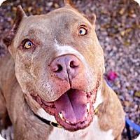 Adopt A Pet :: Daddy - Phoenix, AZ