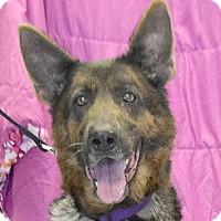 Adopt A Pet :: Daphne - Huntley, IL